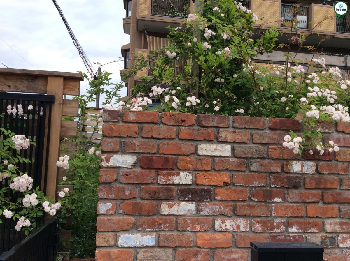 Sử dụng tường chung như thế nào cho hợp lý?